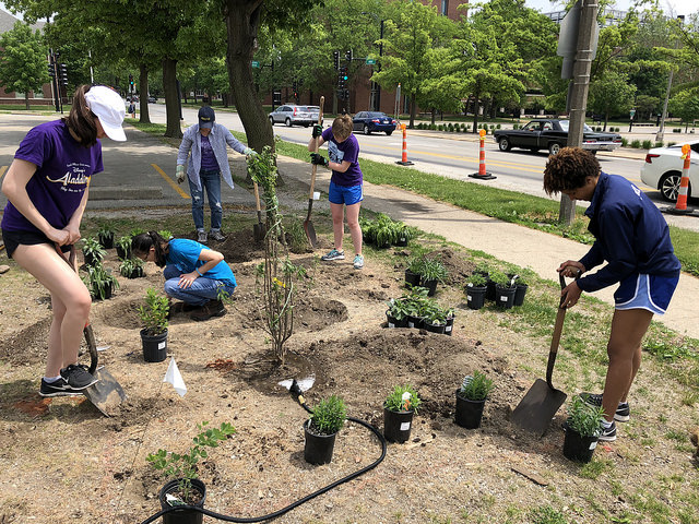 TREE club plants pollinator garden